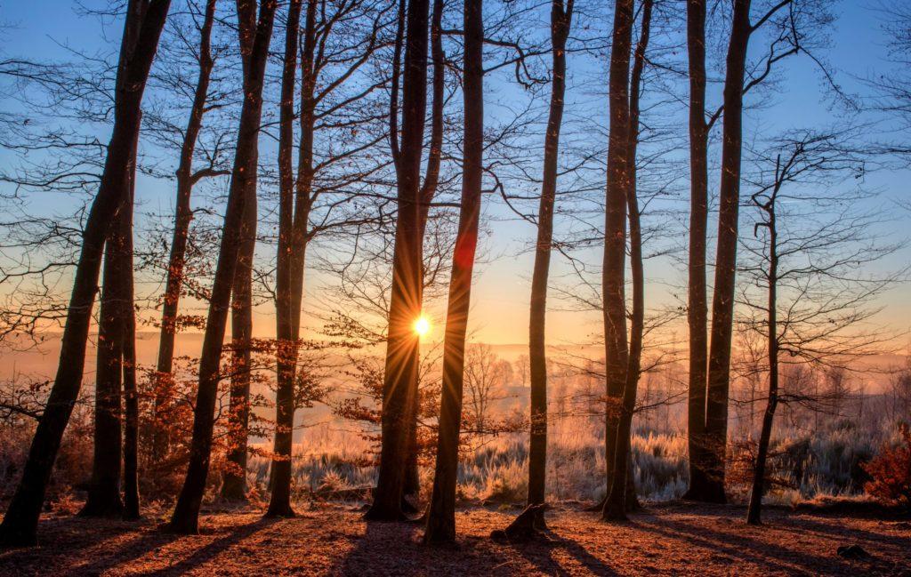 Biwakieren im Wald